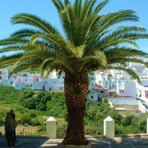 Vejer Tour Andalusien Trip